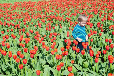 Little boy running on tulips fields photo