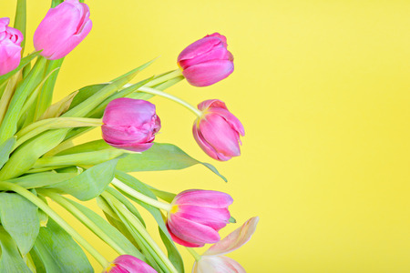 View to the easter pink tulips photo