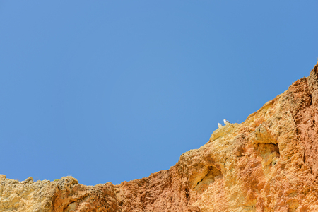 cliff top: Two seagulls sitting on orange cliff top over blue sky Stock Photo