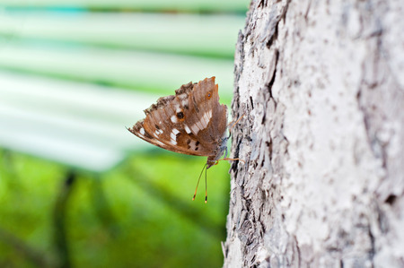 Brown butterfly sitting on a pine tree against a blurred background Stock Photo