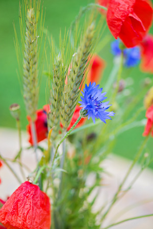 barley head: Bunch of of red poppies, cornflowers and ears of barley, wheat and rye. Shallow depth of field