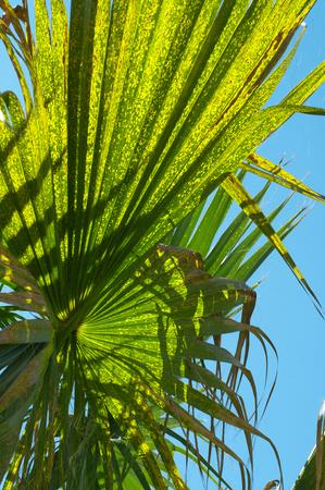 Closeup palm leaf