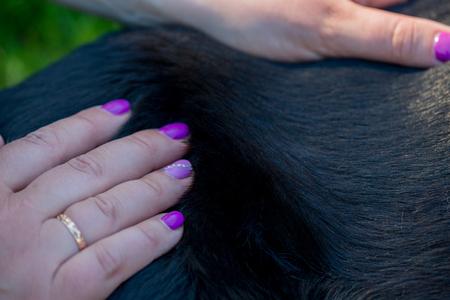 Human hands doing dog massage