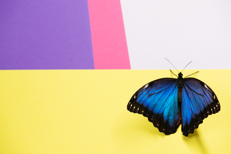 Morpho butterfly over multicolored background Stock Photo
