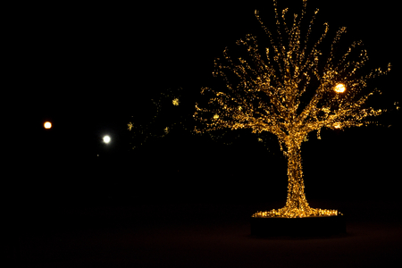 Gold lights Christmas Tree and dark outside