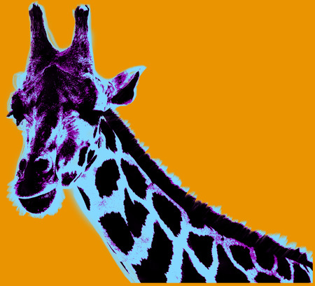 Picture with giraffe over orange background Stockfoto