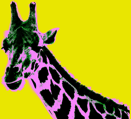 Picture with giraffe over yellow background