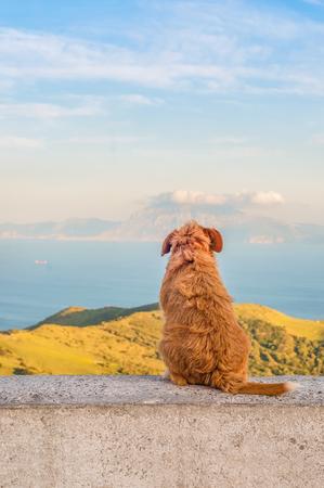 Lonely dog sitting turned backwards