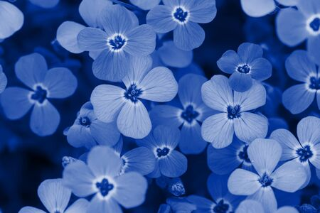 Background of flowers. Blue toned. Standard-Bild - 134851916