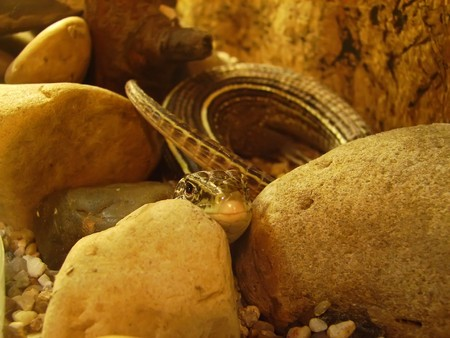 A small snake, hidden in large stones                  Stock Photo - 6892940