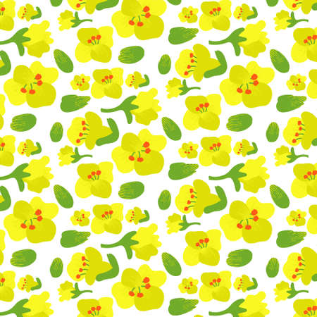 Vector editable EPS 10 file. Rapeseed flower pattern, rapeseed buds, rapeseed inflorescences, white backing. Floral background. Yellow and mustard colors