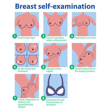 Breast self-test. Phased self breast examination. Mammography.