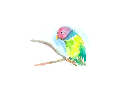Watercolor illustration of a parrot. Vector editable illustration