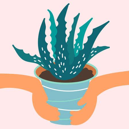 Hands holding a pot of aloe Vera plant. Medicinal plant grown at home. Vector
