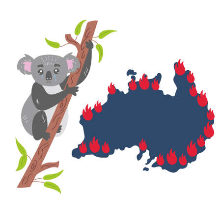 Sad Koala sits on a eucalyptus tree and hides from the fire. The animal world is suffering. An ecological disaster in Australia forest fires. Vector isolated illustration on white background