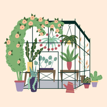Modern home greenhouse with plants. Garden curly ivy and flower pots. Winter glass garden, house greenhouse with plantation. The room is in green. Gardening on the plot. Vector trending illustration