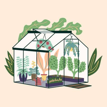 Glass modern greenhouse with garden plants. Garden curly ivy and flower pots. Winter glass garden, house greenhouse with plantation. The room is in green. Gardening on the plot. Vector Иллюстрация