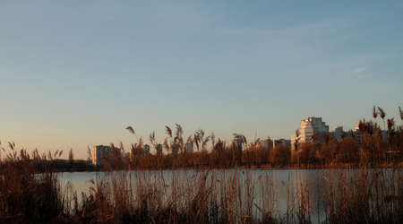 canne: Lago di canne in area urbana