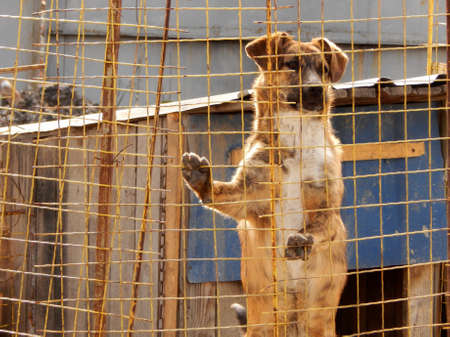 Dog in kennel at animal shelter photo
