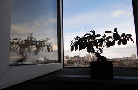 symbols  metaphors: Flower on windowsill as ecological metaphor Stock Photo