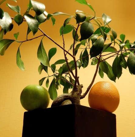 bonsai tree: Orange and apple fruits on square wooden flower pot with bonsai tree Stock Photo