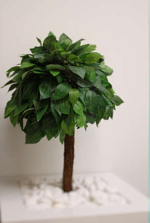 bonsai tree: Round cutted bonsai tree in white wooden flower pot