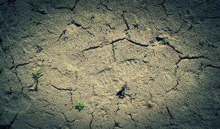 barren land: Grass grows in the barren land detailed texture Stock Photo