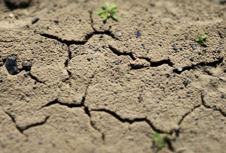 barren land: Grass sprouts breaking through barren land texture background Stock Photo