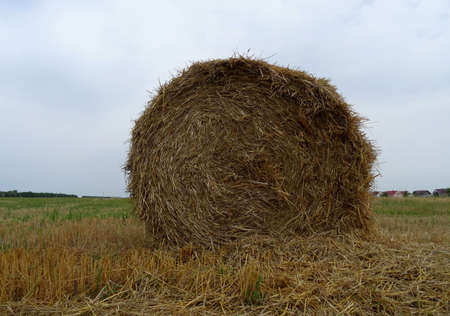 haymow: Round bale of hay on mowed field stock photo