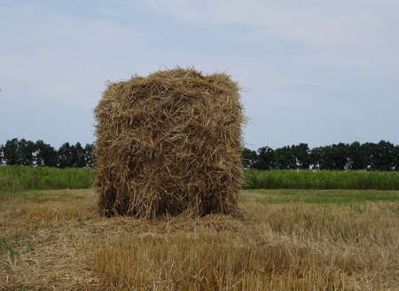 haymow: Hayrick on the field after summer harvesting stock image