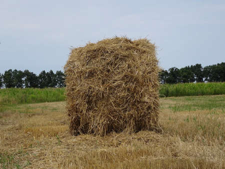 haymow: Haystack on the agriculture mowed field