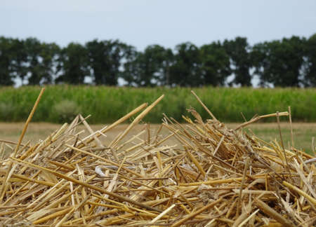 haymow: Head of hayrick on the field after summer harvesting stock image