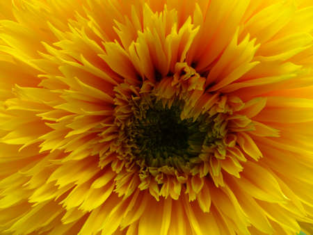 Petals Of Yellow Flower In Bloom Close Up Stockfoto