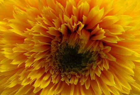 Flower Corolla Macro Shot Stock Photo