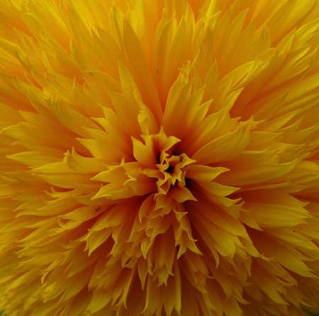 Petals Of Blooming Flower Macro Shot