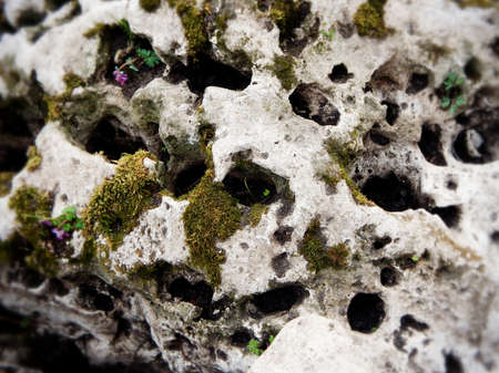 Moss On The Old Sea Stone Texture Background Stockfoto