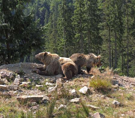 Mother bear with little bear