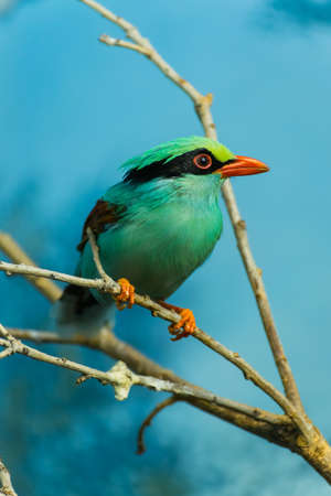 zweig: A beautiful, colorful bird perched on a branch