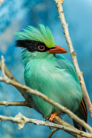 zweig: A colorful bird perched on a branch