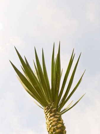 Small palm tree on a background of the sky Stock Photo - 594821