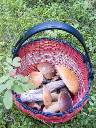 bacca: Basket with mushrooms