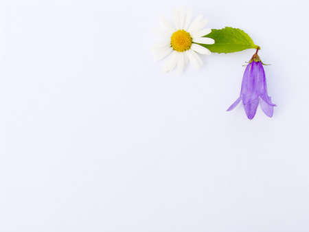 summer flower composition for a congratulatory card Stock Photo - 604640