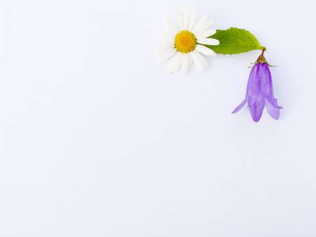 summer flower composition for a congratulatory card Stock Photo - 604640