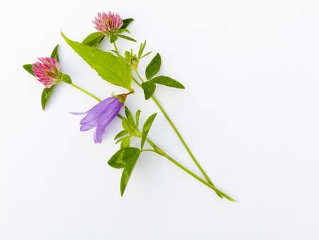 summer flower composition Stock Photo - 605250