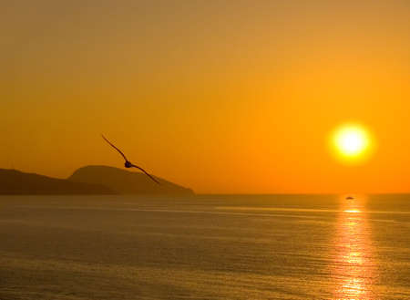 Dawn above the sea. A silhouette of the seagull. The ship on a solar path