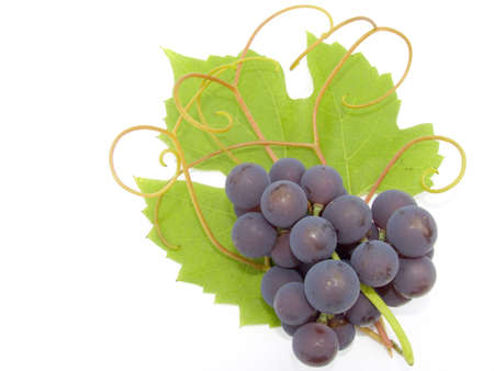Cluster of a grapes on a background of a green sheet and tendril Stock Photo