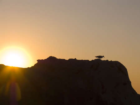 Sunrise on the sea. The seagull on a background of a rising sun photo