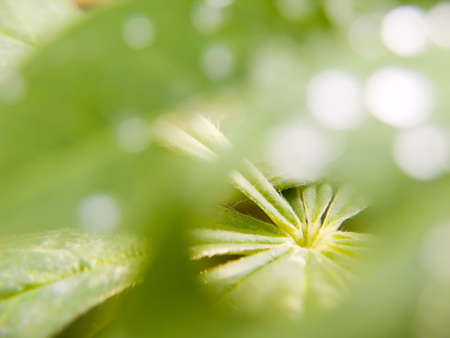 Abstract picture of a nature with green leaves Stock Photo