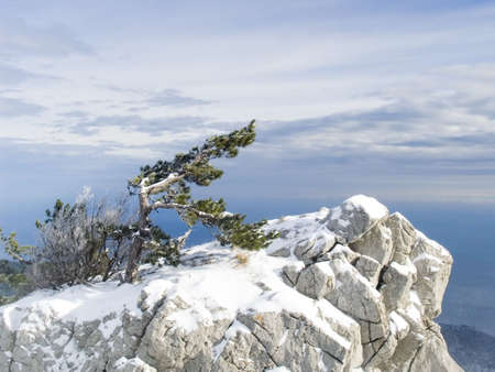 Rock with a lonely pine in mountains in Crimea. Below the sea. A blizzard