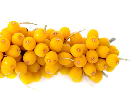 Branch of a berry of sea-buckthorn berries frozen in a deep-freezer. Berries are covered with hoarfrost